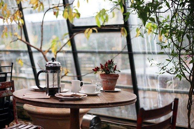 rostliny na okně