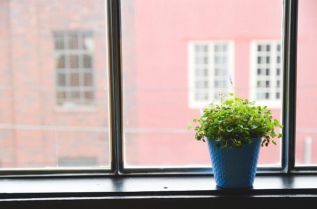 rostlina na parapetě